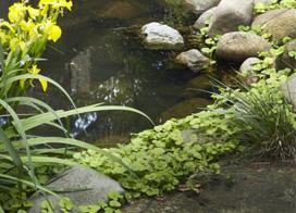 中式入户花园装修效果图片欣赏