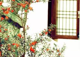 17款中式庭院装修效果图,推窗即可看花