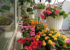 14款阳台花园装修效果图,让阳台充满生机