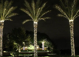 一组好看的led景观树灯效果图片赏析