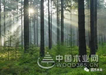 园方木业,用先进的设备生产好的明仕亚洲手机版