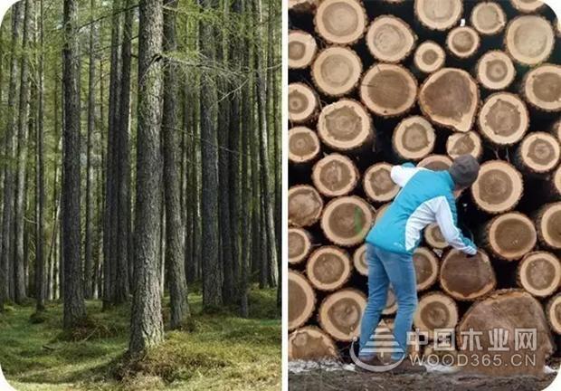 千山木业携首发新品,点亮成都建博会!