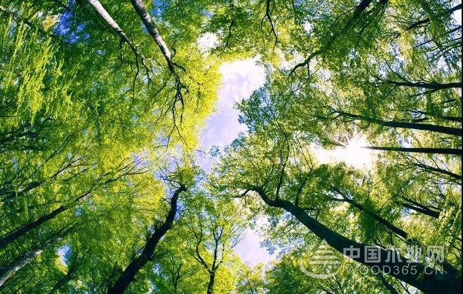 黄果树板材负氧离子系列│E0级生态板,品质与众不同