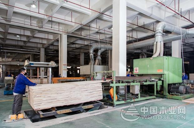 大王椰工厂开放日圆满成功,品质追寻之旅永不落幕