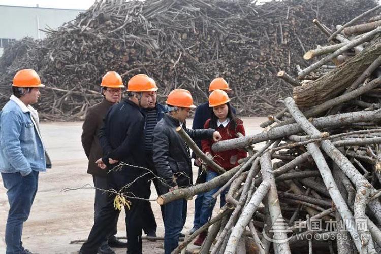 再迎贵宾 志邦、索菲亚深度考察科林木业
