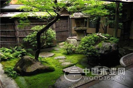 房前屋后种什么树好?种树都有什么讲究?