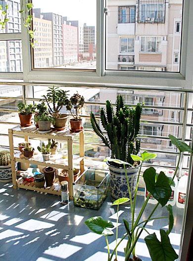阳台花架效果图 打造绿色环绕家