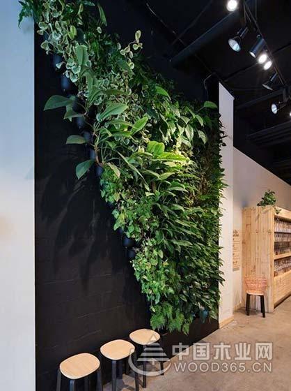 美观又实用,9款植物背景墙装修效果图