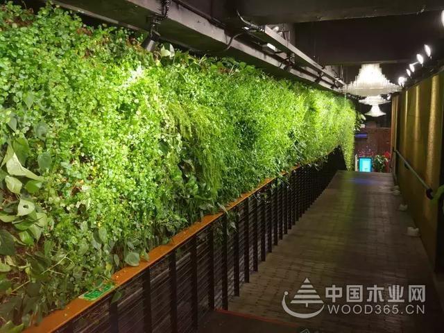 室内植物墙效果图片,室内天然绿色空间