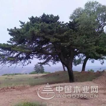 一组园林景观效果图展示