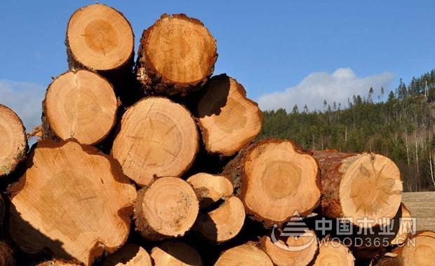 木材的选择及木材的性质