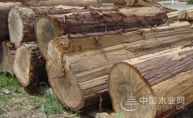 黄柏木木材的特性
