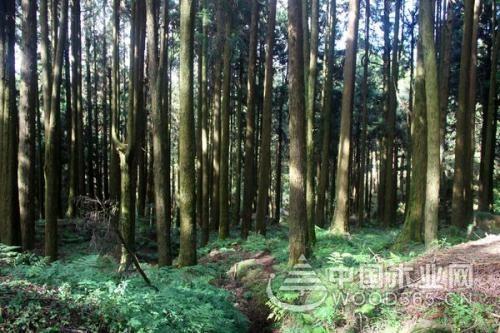 桧木是什么?