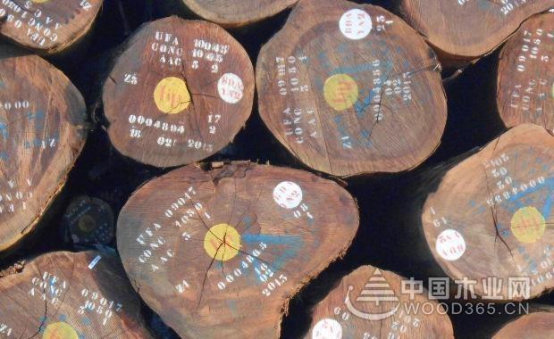 虎斑楝木材介绍