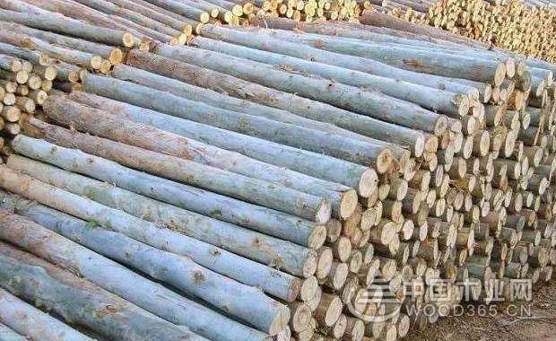 桉樹木材價格是多少?