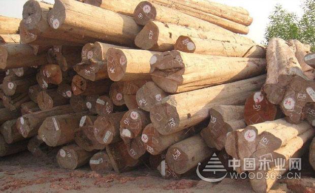 缅甸木材的优势