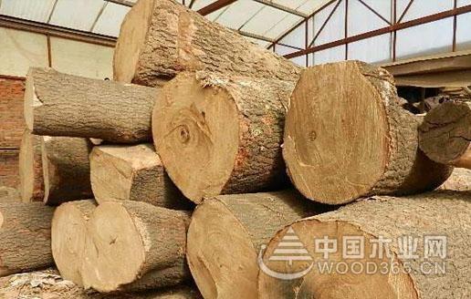 泡桐木好_泡桐木的四大特点-中国木业网