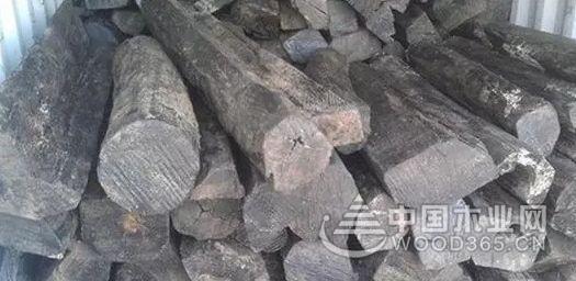 毛药乌木木材的特征
