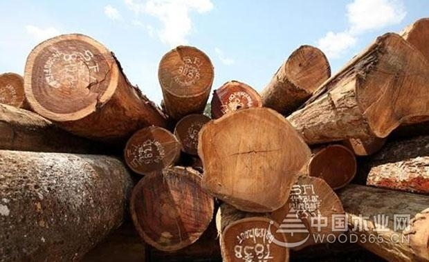 大美木豆木材知识