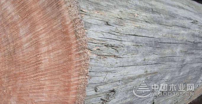 玫瑰桉木板材加工等级与标准