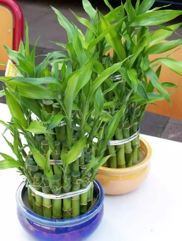 - Plantas de agua para interiores ...