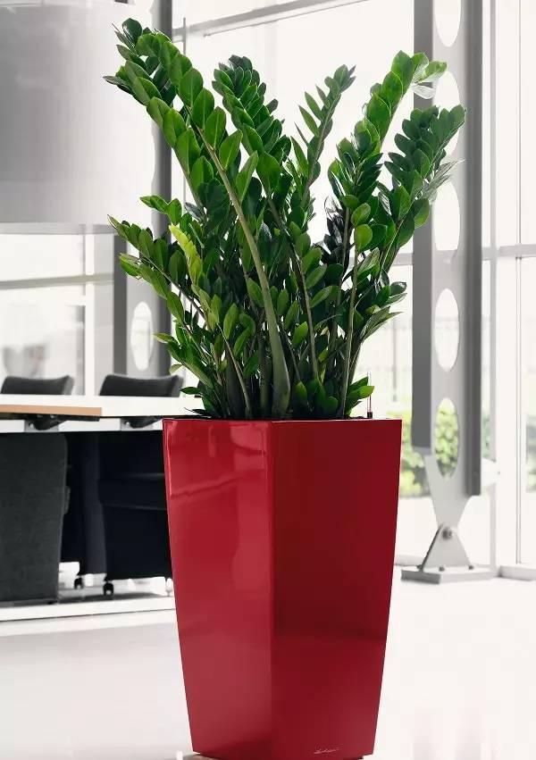 室内植物图片及名称介绍