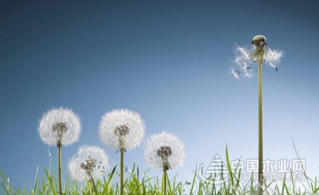 植物通过风传播种子