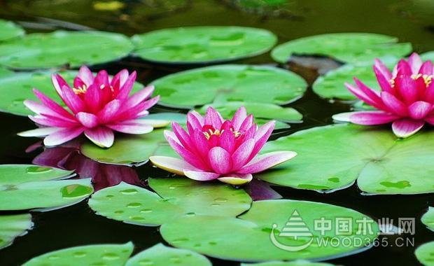 植物通过水传播种子