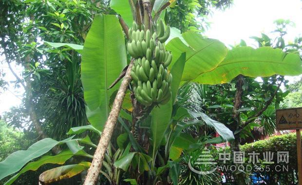 植物通过哺乳动物传播种子