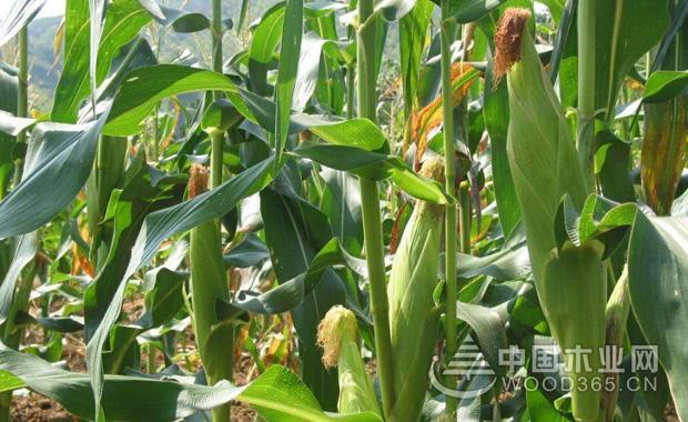 植物通过人类传播种子