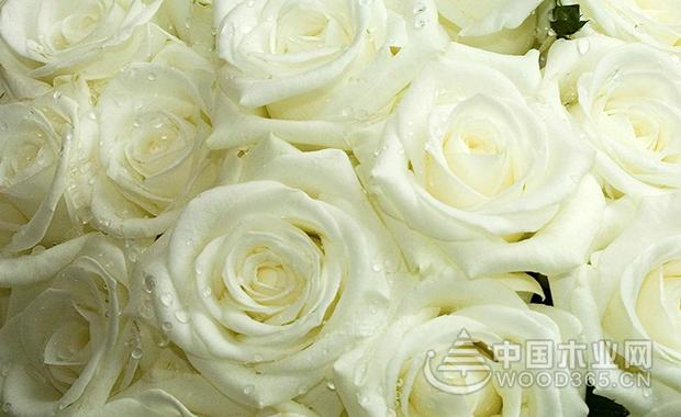 11朵白玫瑰花语