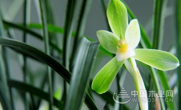 春兰花的养殖办法|春兰花图片大全图片