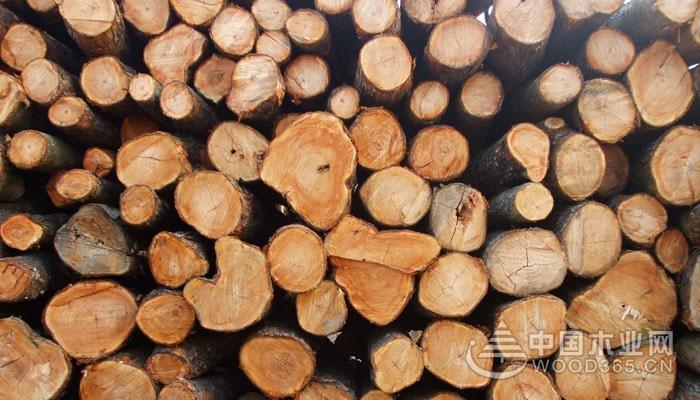 樟木的优缺点和鉴别樟木方法
