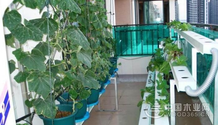 阳台种菜的注意事项