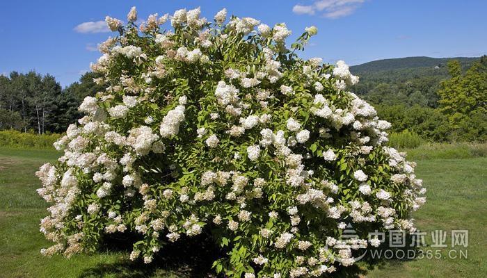 花灌木怎样提高成活率?