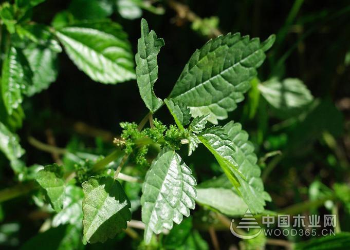 ps画笔素材植物