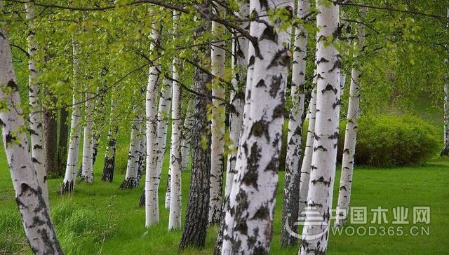 怎么样种植盆栽树木?什么时候种植最好?