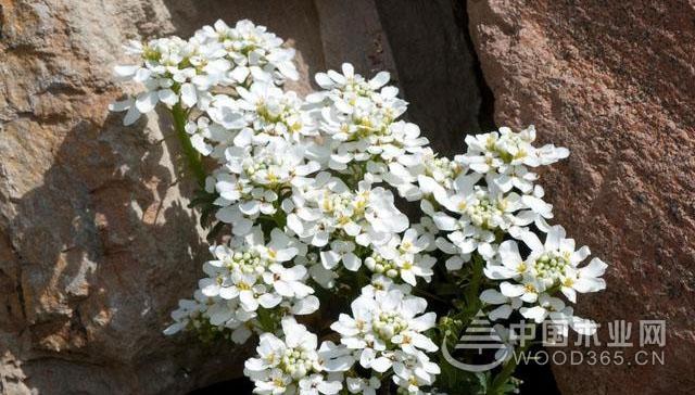 常见植物的生命周期:何时播种,何时开花?