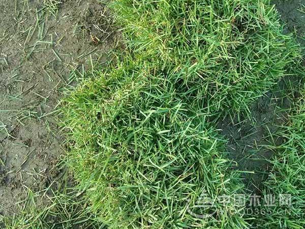 边坡撒草籽多少钱一平方?