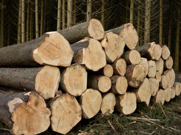木材市场各有各的无奈,结果都是涨价!