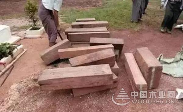 缅甸3天查获80吨走私贵重木材