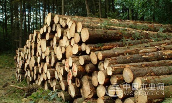 【周评】各地木材价格皆有上涨   金九银十已见端倪