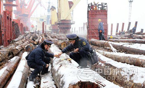 靖江港工作人员冒雪实施原木表层检疫