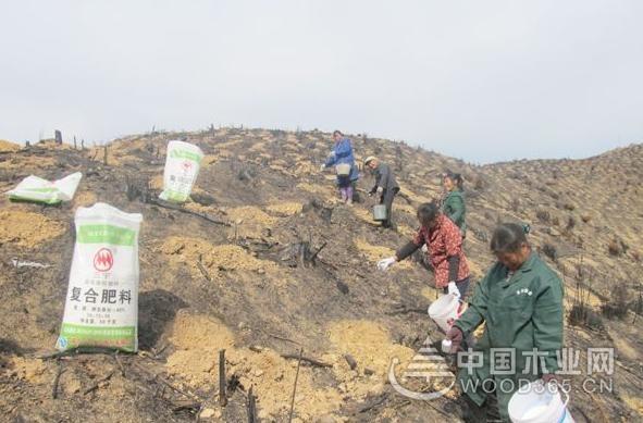 吉安安福县高标准建设国家木材战略储备林