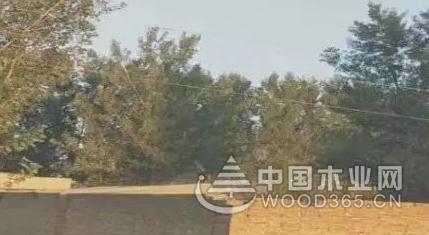 河北广宗县一板材加工厂被曝环境污染