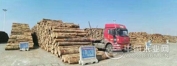 """新民洲:向着""""中国木材进口第一港""""奋力冲刺"""