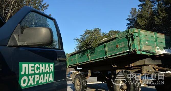俄林业局:不存在禁止对华出口木材的问题