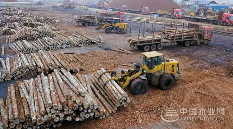 岚山区以壮士断腕的决心推动木材产业凤凰涅槃