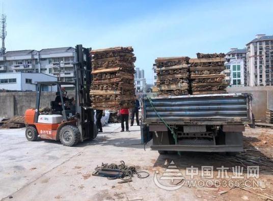 浙江路桥集中销毁了11000根松材线虫病疫木