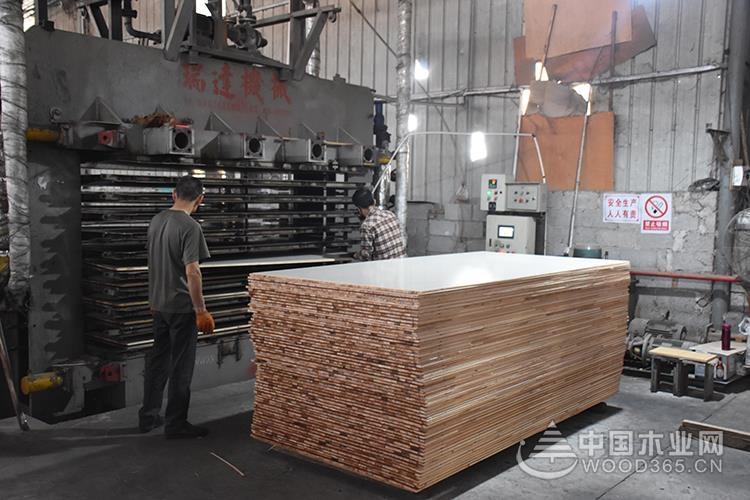 【匠心万里行】桥牌:不忘初心 坚守品质打造每一块板材